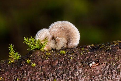 Mushroom, Tree Fungus, Sponge