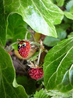 Funny Strawberry, Wood Strawberry, Strawberry With Eyes
