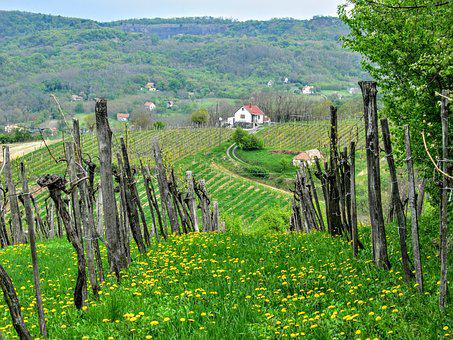 Grape, Wine Region, Wine, Vineyard, Landscapes