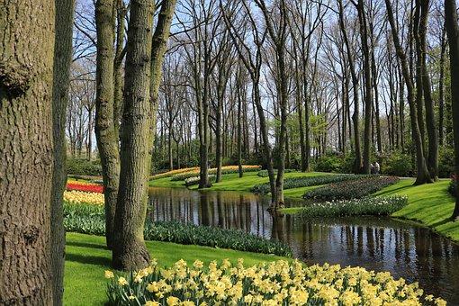 Keukenhof, Bach, Tulips, Trees, Flora, Park