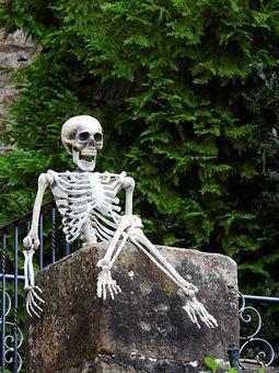 Skeleton, Frame, Bone, Death, Live, Human, Sit, Click