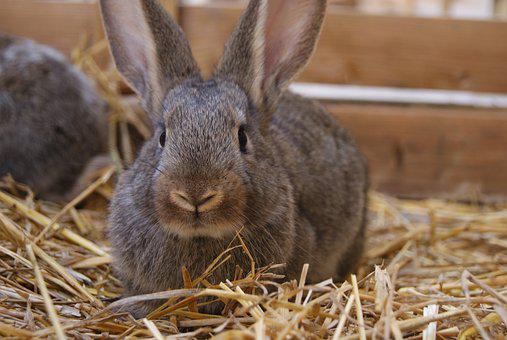 Rabbit, Bunny, Easter, Cute, Holiday, Pet, Fluffy, Ears