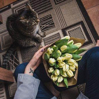 Cat, Bouquet, Tulips, Hands, Legs, Girl, Comfort, House