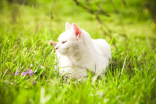 Young Cat, Meadow, Chill Out, Green, Spring, Grass