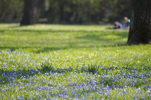 Park, Magdeburg, Blue Star, Blossom, Bloom, Meadow