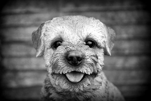Dog, Pet, Animal, Cute, Canine, Puppy, Domestic, Mammal