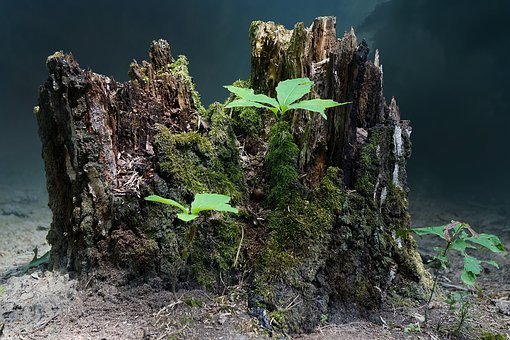 Tree Stump, Live New, Tree, Nature, Forests, Sprout