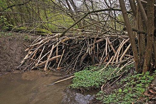 Beavers, Tama, The Brook, The Founding Fathers, Poland