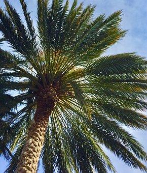 Palm, Tree, Palm Tree, Tropical, Nature, Travel, Plant