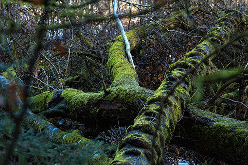 Tree Root, Moss, Overgrown, Green, Mystical, Nature