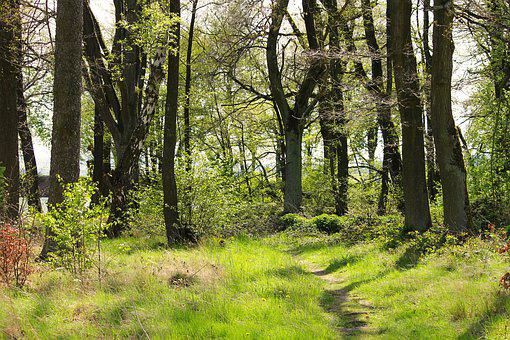 Spring Forest, Forest, Spring, Trees, Green, Nature