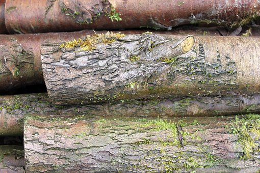 Logs, Moss, Wood, Tree, Old, Nature, Texture, Bark