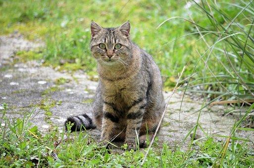 Cat, Feline, Animal, Domestic Animal, Cat Eyes, Animals