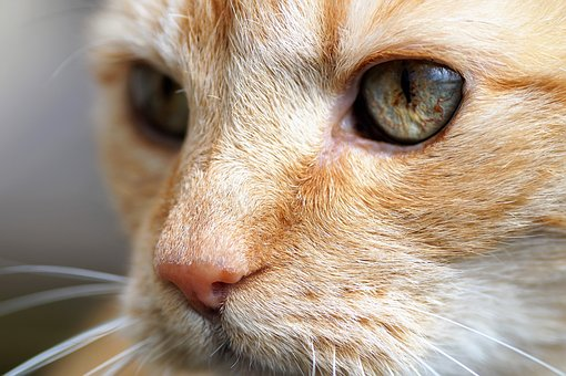 Cat, Tomcat, Redheaded, View, Cat's Eyes, Green Eyes