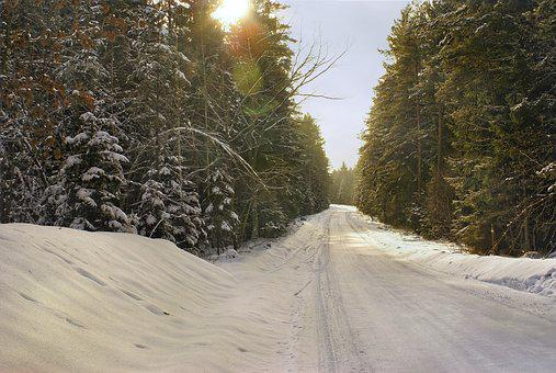 Winter, Forest, Way, Snow, Frost, Coniferous