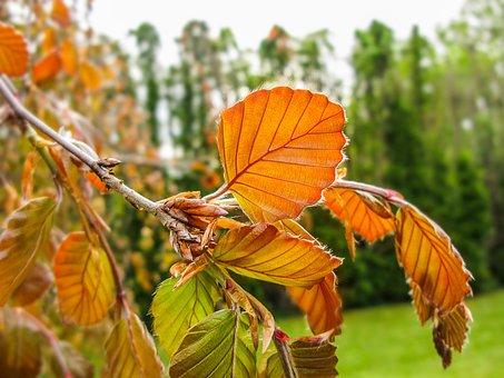 Foliage, Orange, Garden, Horticulture, Green, Nature