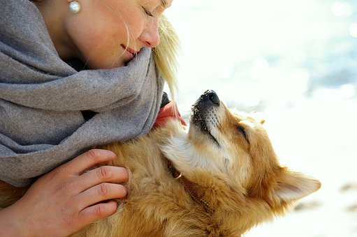Trust, Friends, Confidence, Dog, Girl, Relaxed