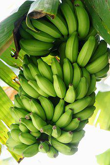 Banana, Shrub, Banana Shrub, Yellow, Healthy, Fruit