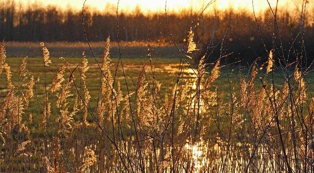 Grass, Sunset, Mood, Nature, The Sun, West, Landscape
