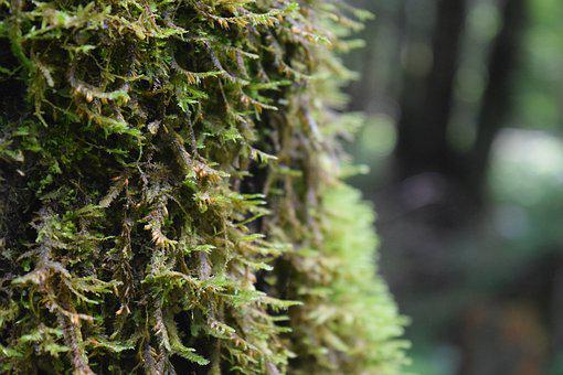 Moss, Nature, Tree, Green, Forest, Natural, Plant
