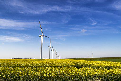 Oilseed Rape, Field Of Rapeseeds, Windmill, Wind Power