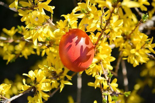 Easter, Eggs, Colors, Spring, Color Eggs, Red