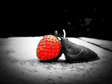 Strawberry, Snail, Red