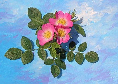 Flowers, Wild Rose, Plant, Blossom, Bloom, Rose