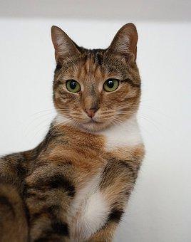 Cat, Tabby, Kitty, Sweet, Animal Companion, Fur
