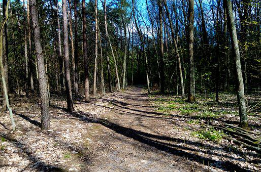 Forest, The Path, Tree, Green, Spacer, Reserve