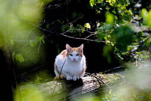 Cat, Forest, Kitten, Nature, Curious, View