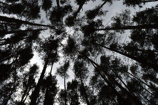 Forest, Trees, Wallpaper, Wallpaper Images, Nature