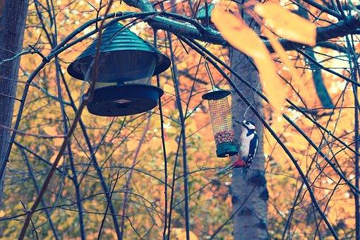 Woodpecker, Autumn, Bird, Nature, Wildlife, Tree