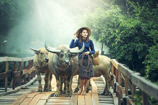 Agriculture, Animals, Asia, Beautiful, Boys, Buffalo