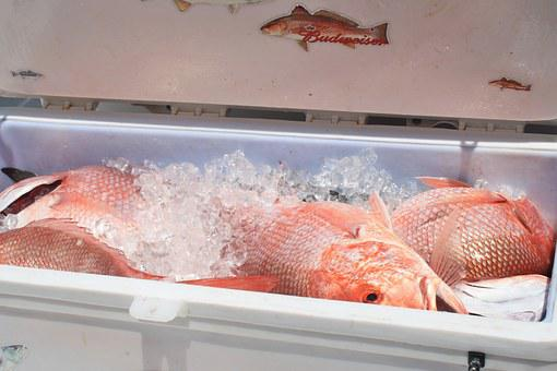 Cooler, Seafood, Red Snapper, Louisiana, Fishing, Ice