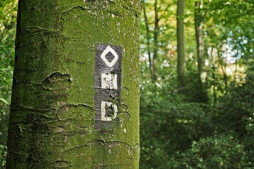 Tree, Forest, Nature, Landscape, Strains, Tree Bark