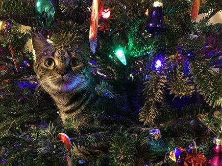 Kitty, Christmas Tree, Pet, Animal, Cute, Feline