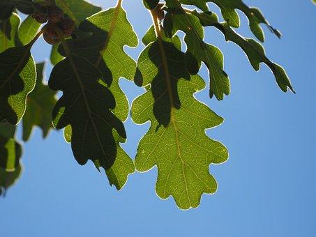 Leaves, Green, Silvery, Shine, Silver Edge, Light
