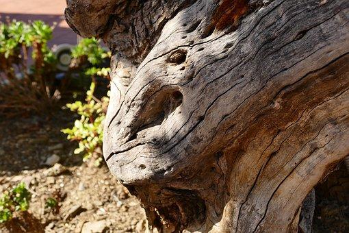 Wood, Old Tree, Olive Tree, Log, Old, Gnarled