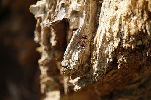 Ant, Macro, Insect, Macro Photography, Red Ant, Animal