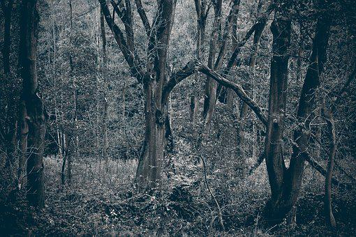 Forest, Trees, Nature, Landscape, Branch Branches, Mood