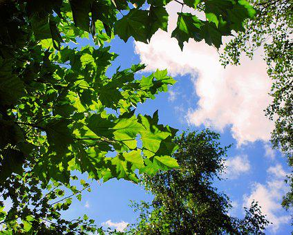 Autumn, Canopy, Sky, Clouds, Mood, Trees, Green