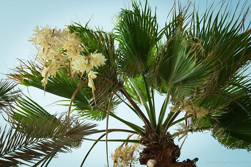 Palm Tree, Palm, Tree, Tropical, Vacation, Nature