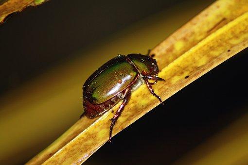 Insect, Macro, Nature, Animal, Black, Sting, Bug, Wing