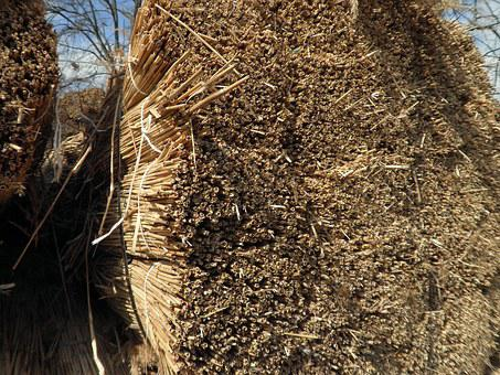 Reed, Grass, Roofing Material, Nature, Dry