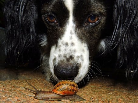 Dog, Snail, To Watch, Animal, Sniff, Look, Crawl