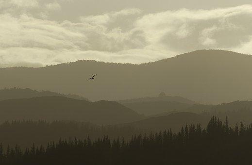 Layers, Mountain, Bird, Flying, Telephoto, Golden Hour