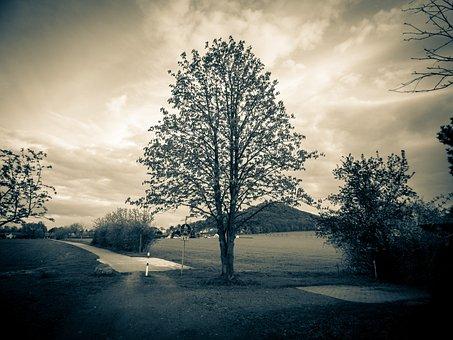 Tree, Sky, Landscape, Crown, Atmosphere Dusk, Nature