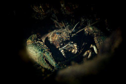 Cancer, Diving, Underwater, Macro Photography