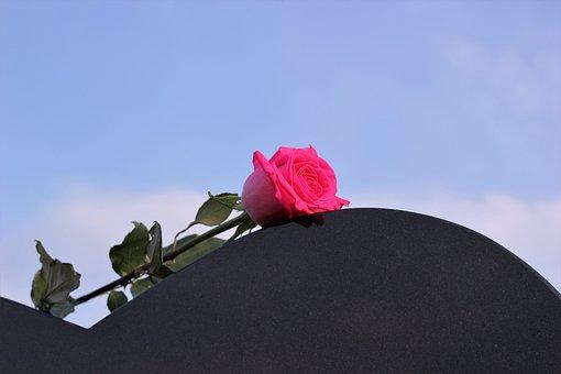 Pink Rose, Heart Gravestone, Love